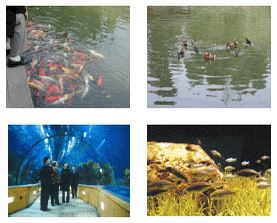 impact of tourism industry on environment pdf